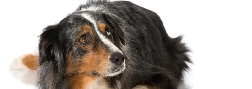 Angst-bei-Hunden-slider