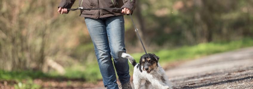 Hund-zieht-an-der-Leine-slider