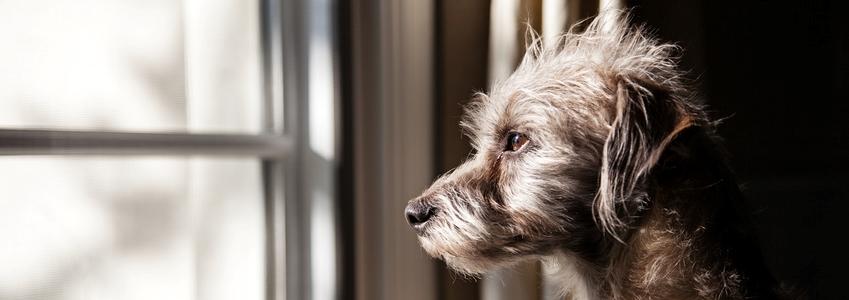 Trennungsangst-Hund-slider