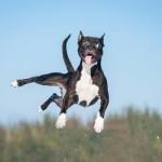 Mangelnde Impulskontrolle beim Hund